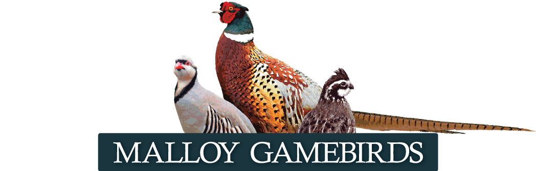 Malloy GameBirds - Iowa Bobwhite Quail, Pheasant and Chukar